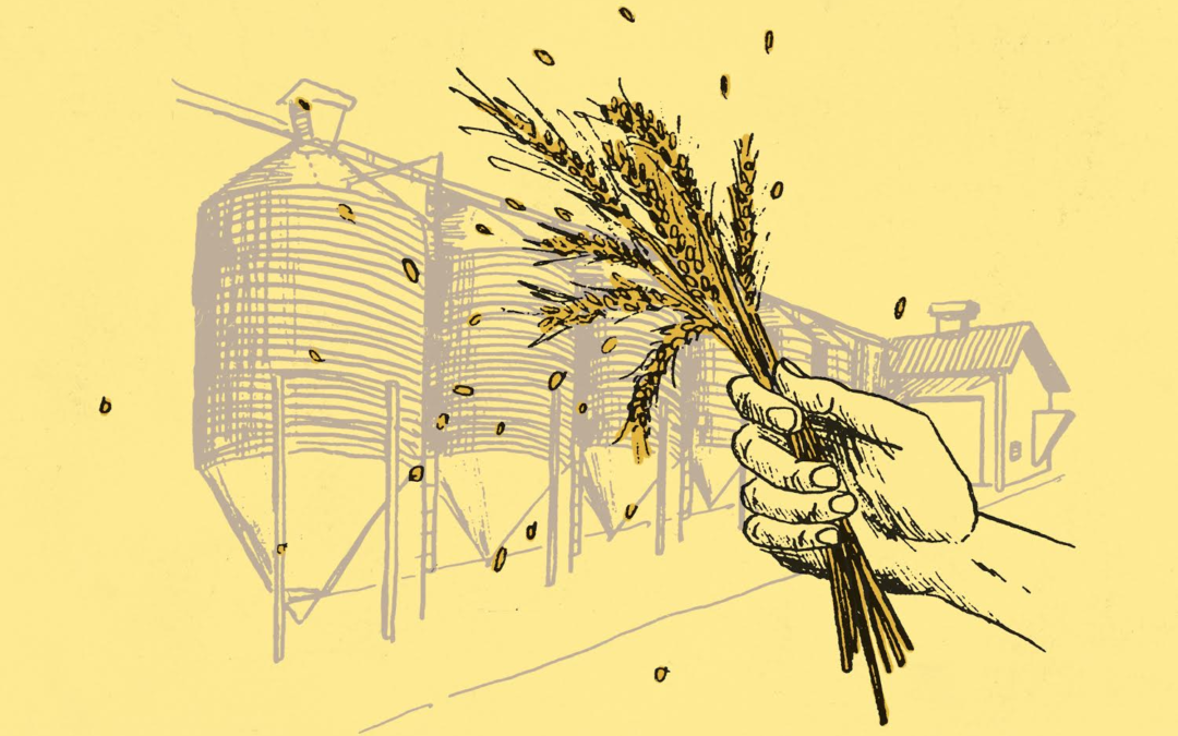Welcome to Fringe Division — The Innovative Malting Technology That's Producing Better Beer