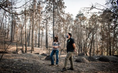 """Tioga-Sequoia Brewing Company Targets """"1% for the Planet"""" Donations to Creek Fire Recovery Efforts"""